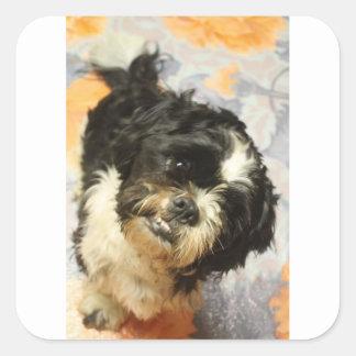 FB_IMG_1481505521015 Shitzu dog Square Sticker