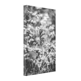 Feather in the grass canvas print