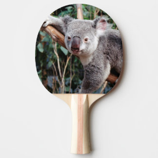 Featherdale Wildlife Park, Koala Bears Ping Pong Paddle