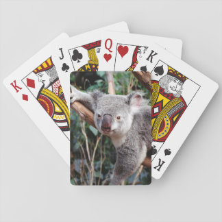 Featherdale Wildlife Park, Koala Bears Playing Cards