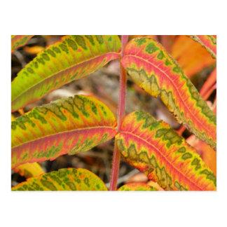 Feathered Leaf Postcard