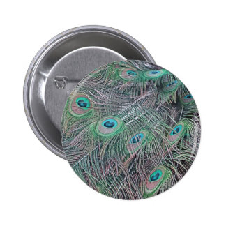 feathers of a peacock. 2 inch round button