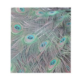 feathers of a peacock. notepad