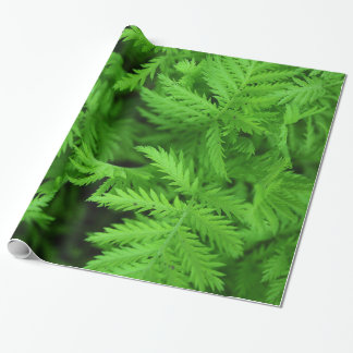 Feathery Green Ferns Wrapping Paper