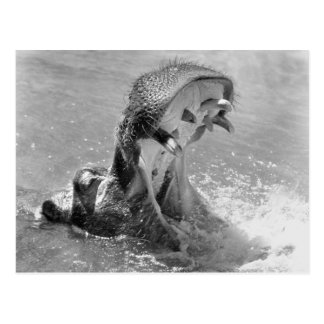 Feed Me Hippo Postcard