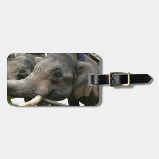 Feeding Asian Elephants Bananas in Thailand! Luggage Tag