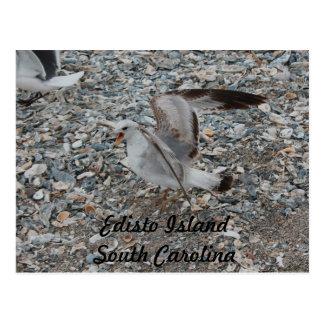 Feeding the Gulls at Edisto Island South Carolina Postcard