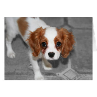 Feel Better Cavalier King Charles Spaniel Card