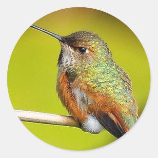 Feisty Little Girl: Rufous Hummingbird Round Sticker