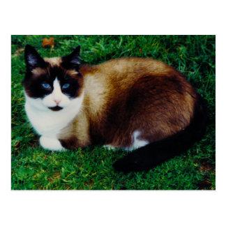 Feline Beauty Postcard