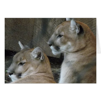 Feline Couple Card