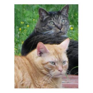Feline Duo Postcard