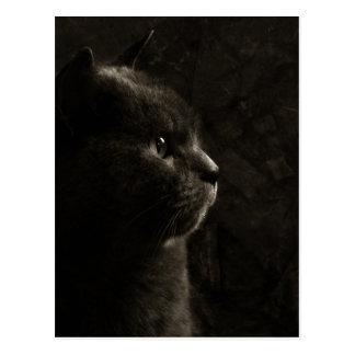 Feline silhouette - Postcard