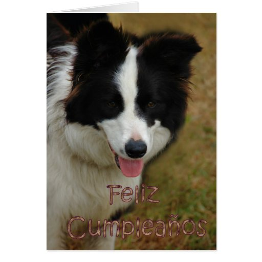 Feliz Cumpleaños Spanish Birthday with collie dog Card