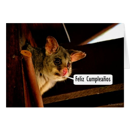 Feliz Cumpleaños Spanish Birthday with possum Greeting Cards