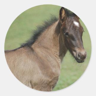 Fell Pony Foal Sapphire Classic Round Sticker