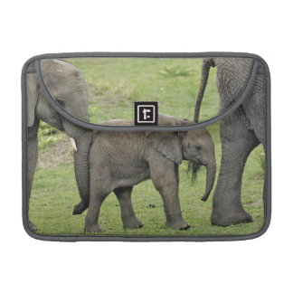 Female African Elephant with baby, Loxodonta 3 Sleeves For MacBook Pro