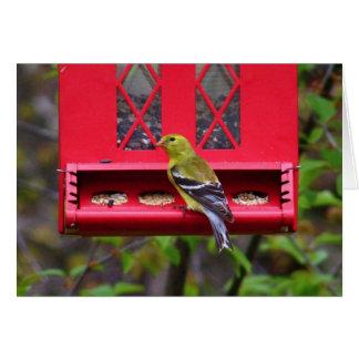 Female American Goldfinch Card