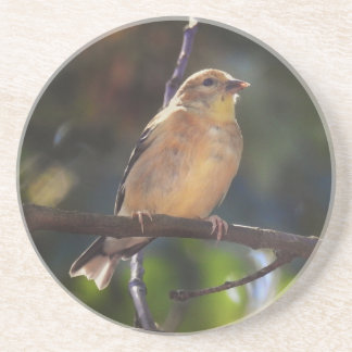 Female American Goldfinch Coaster