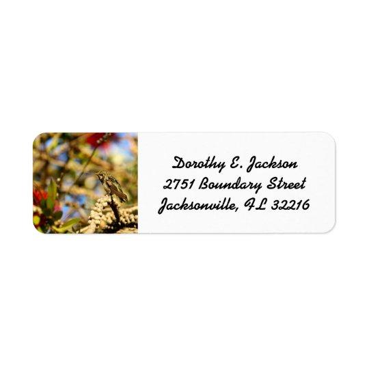Female Anna's Hummingbird, CA, Return Address Return Address Label