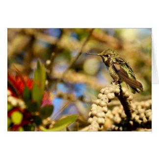 Female Anna's Hummingbird, California, Greeting Card