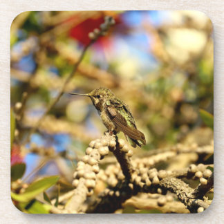 Female Anna's Hummingbird, California, Photo Beverage Coasters