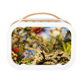 Female Anna's Hummingbird, California, Photo Lunchboxes