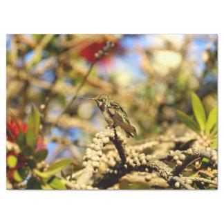 Female Anna's Hummingbird, California, Photo Tissue Paper