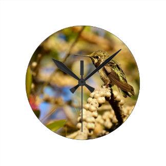 Female Anna's Hummingbird, California, Photo Wallclock