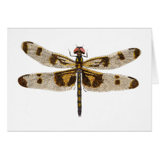 Female Banded Pennant Dragonfly Card