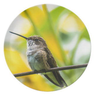 Female Broad-tailed Hummingbird With Sunflowers Party Plates