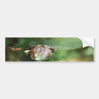 Female Bullfrog Laying Eggs Bumper Sticker