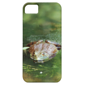 Female Bullfrog Laying Eggs iPhone 5 Case