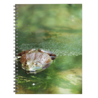 Female Bullfrog Laying Eggs Spiral Notebook