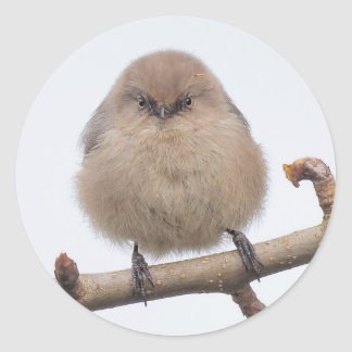 Female Bushtit in the Pear Tree Classic Round Sticker