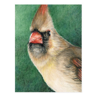 Female Cardinal Art Postcard
