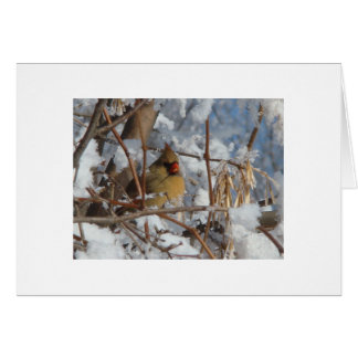 Female Cardinal Feeding In Snowy Tree Card