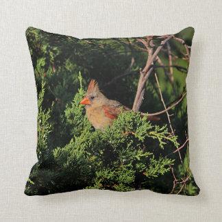 Female cardinal in cedar tree throw pillow