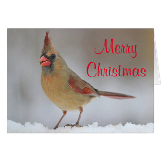 Female cardinal in the snow card