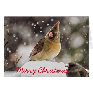 Female Cardinal in the Snow, Christmas Card