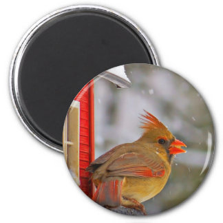 Female Cardinal magnet