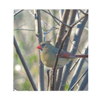 Female Cardinal Notepads