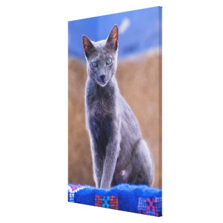 Female cat sitting, Morocco Canvas Print