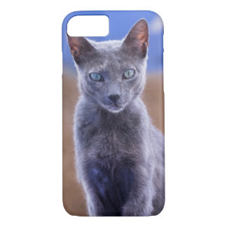 Female cat sitting, Morocco iPhone 7 Case