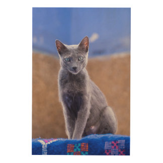 Female cat sitting, Morocco Wood Print