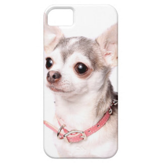 Female chihuahua with pink collar iPhone 5 covers