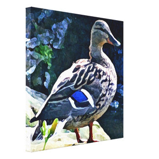 Female Duck Keeping an Eye on You Canvas Prints