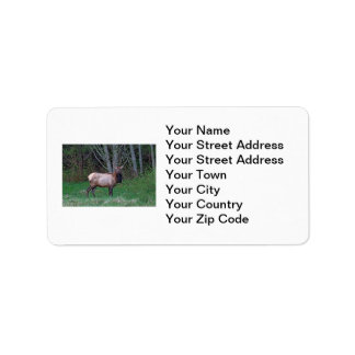 Female Elk Picture Label