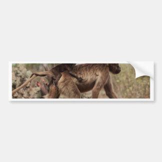 Female gelada baboon with a baby bumper sticker