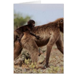 Female gelada baboon with a baby card